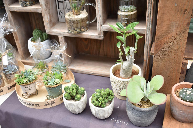 Plants+
