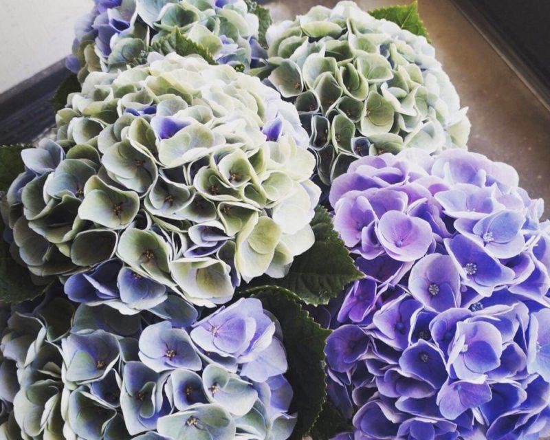 紫陽花の小屋